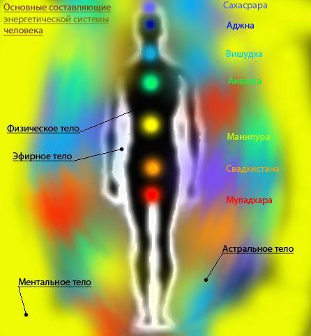 Пропорциональная модель тонких тел человека