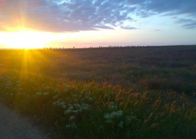 Лавандовое поле